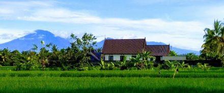 Tai Chi & Qi Gong at Tai Chi Bali Healing Arts Centre Tanah Lot Bali Asia